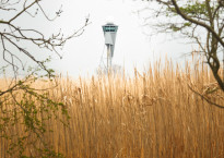 Olifantsgras Biobased economy en ganswerend bij Schiphol